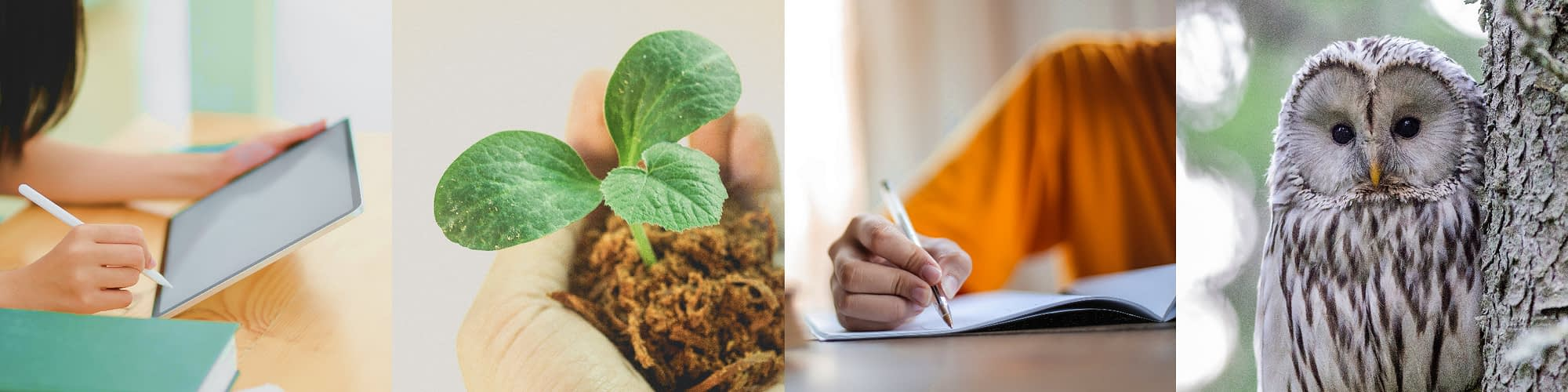 edunomix-learner-cohorts-where-innovation-flourishes-01
